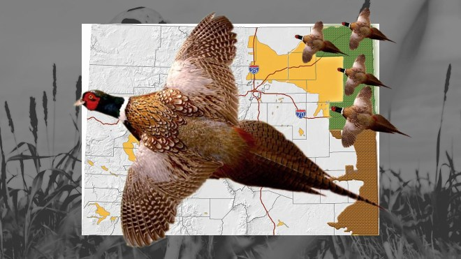 pheasant forecast still for youtube