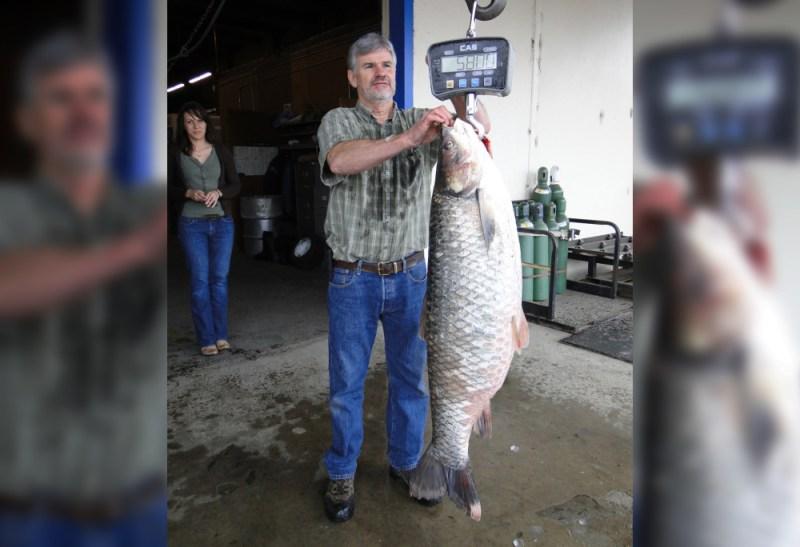 state-record grass carp