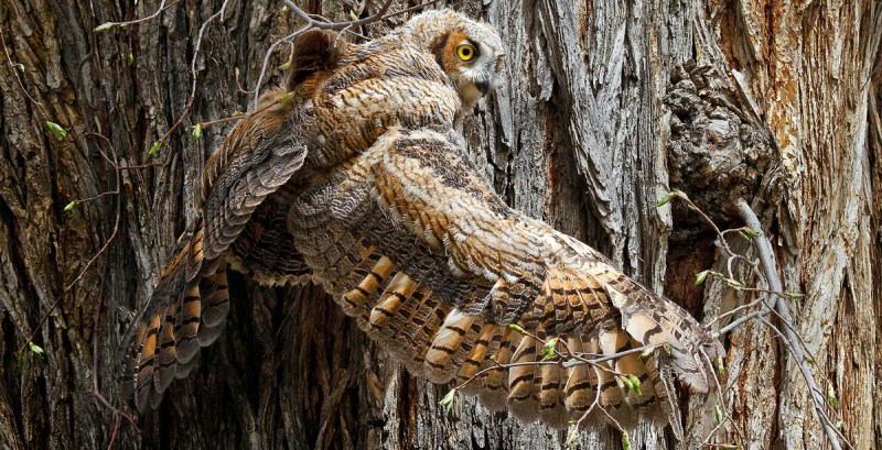 Owl clinging to tree