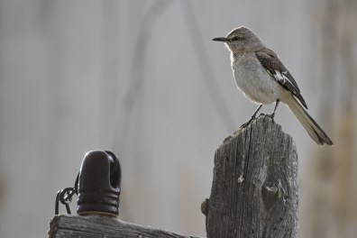 mockingbird-Wayne-D-Lewis-DSC_0627