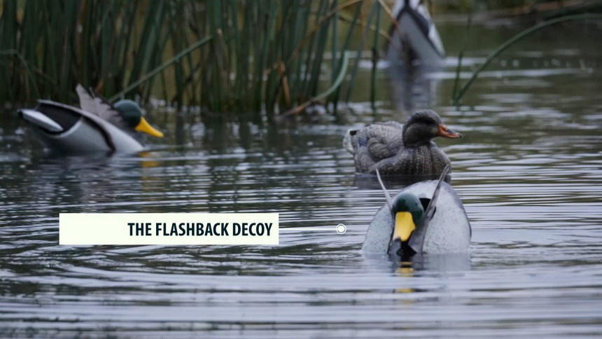 Flashback-Decoy