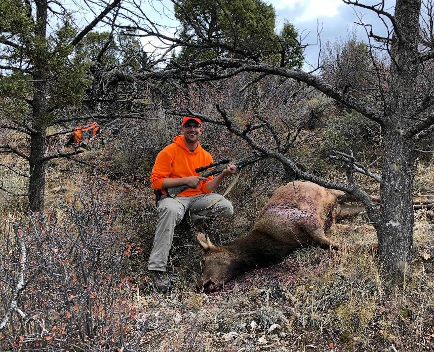 Tom's cow elk