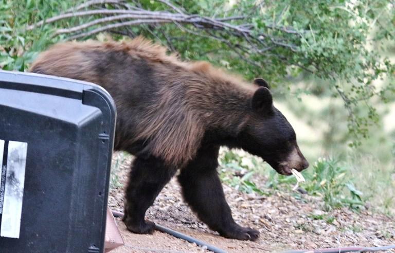 Black Bear - photo by DJ Hannigan
