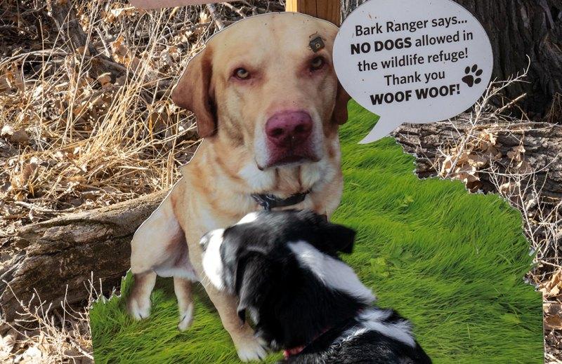 Lulu standing in front of Bark Ranger sign