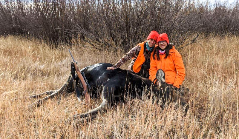 Harvested Moose