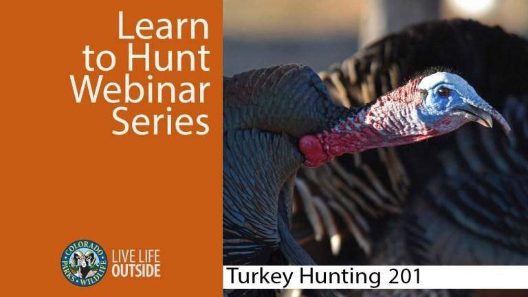 Turkey 201 title screen