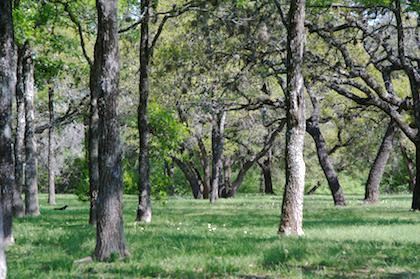 Walnut Creek Park to Balcones District Park via Northern Walnut Creek Trail