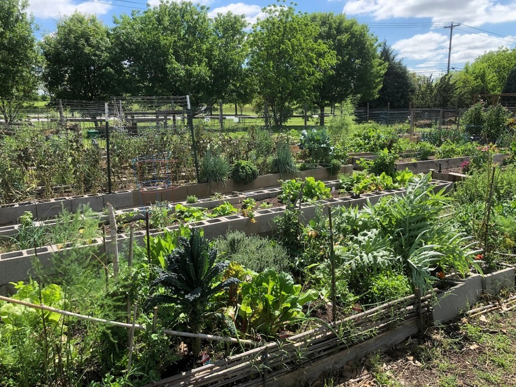 Another view of the community gardens in Patterson Park.