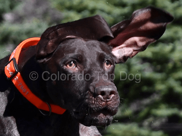 Colorado's Premier Dog Training