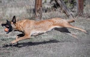 Colorado Top Dogs