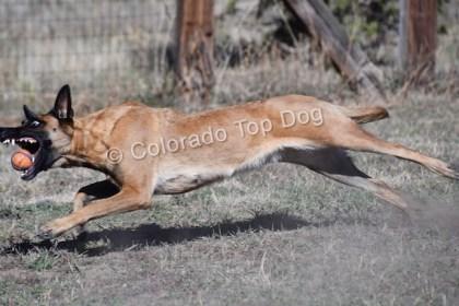 Colorado's Premier Dog Training