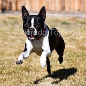 Dog Training in Denver