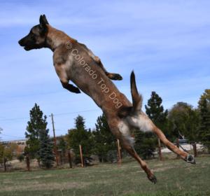Lone Tree Dog Training