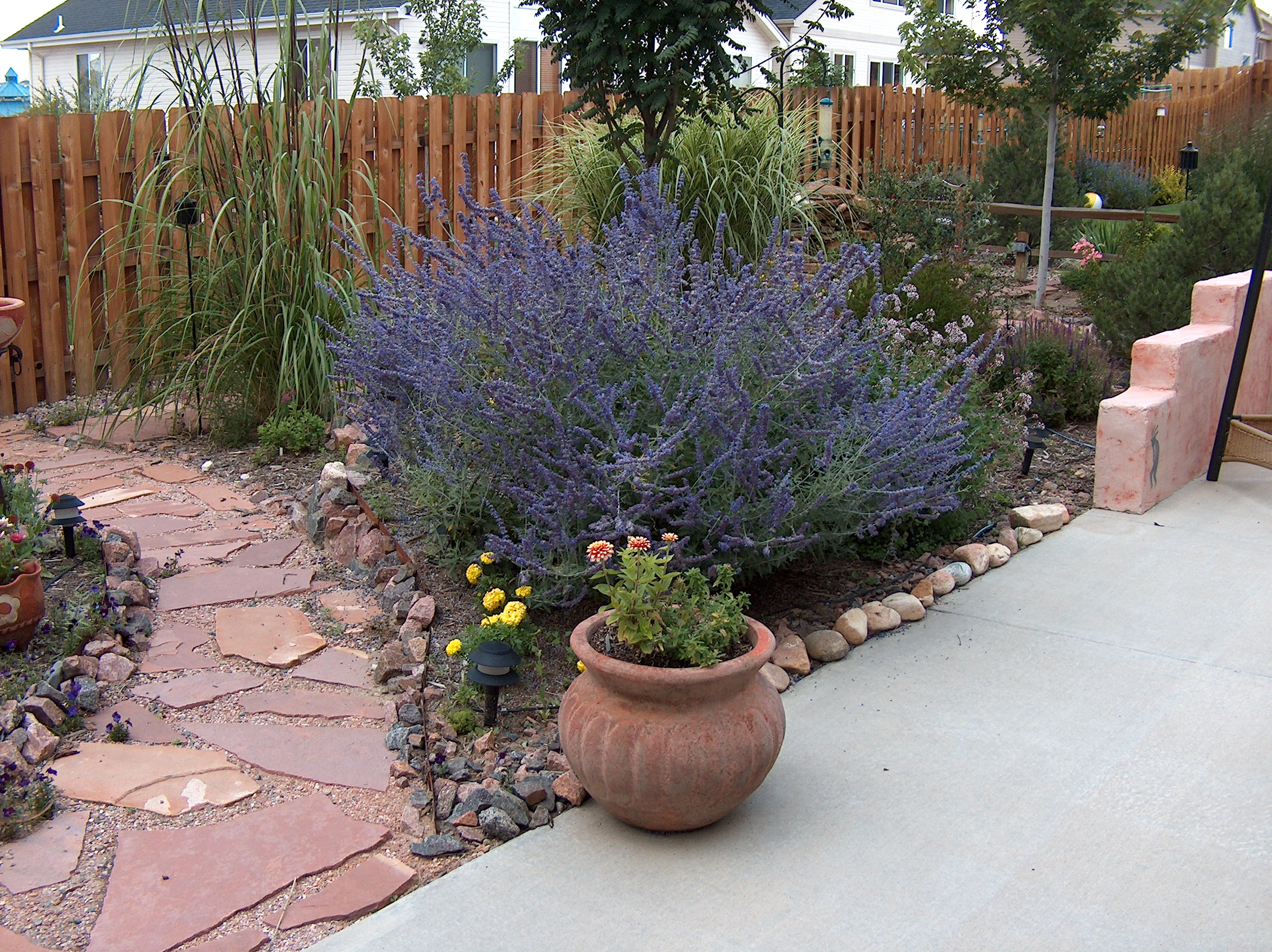 How To Cut Back Russian Sage Colorado Yard Care