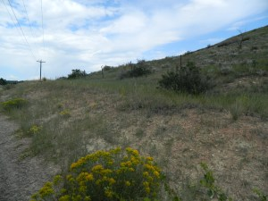 Foothills vegetation in late August