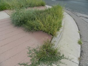 Tall weeds will often eventually create tumbleweeds if neglected.