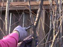 Pruning: Thinning vs. Heading Cuts