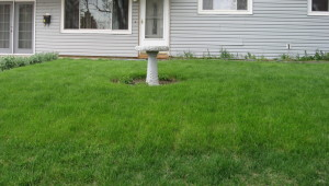 Thick Lawn in Spring