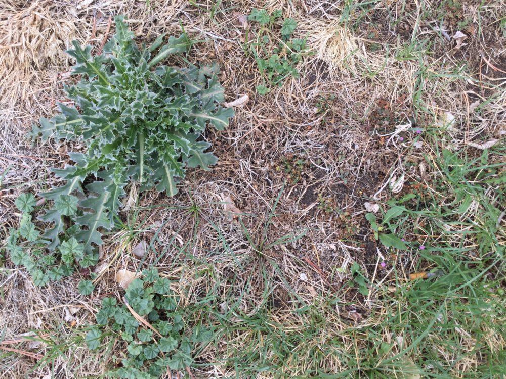 Degraded Lawn