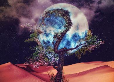 ONEWE – Regulus (야행성)