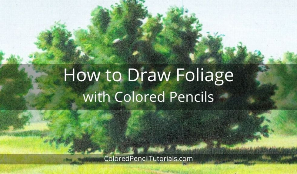 How to Draw Foliage with Colored Pencils