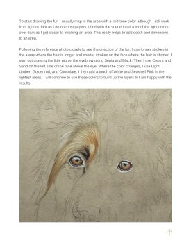 Long Haired German Shepherd Tutorial Page 6