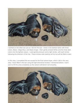 Cavalier King Charles Spaniel Tutorial Page 13