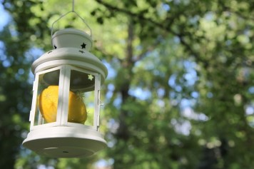 colores-de-boda-8.11-faroles-suspendidos-limones