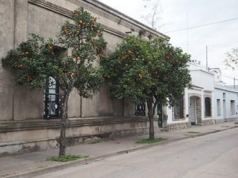 In San Antonio wachsen die Orangen in den Strassen