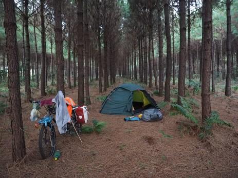 In Reih und Glied stehen die Bäume... und dazwischen ein guter Platz fürs Heim