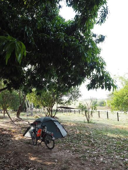Mein Heim unter einem Mangobaum
