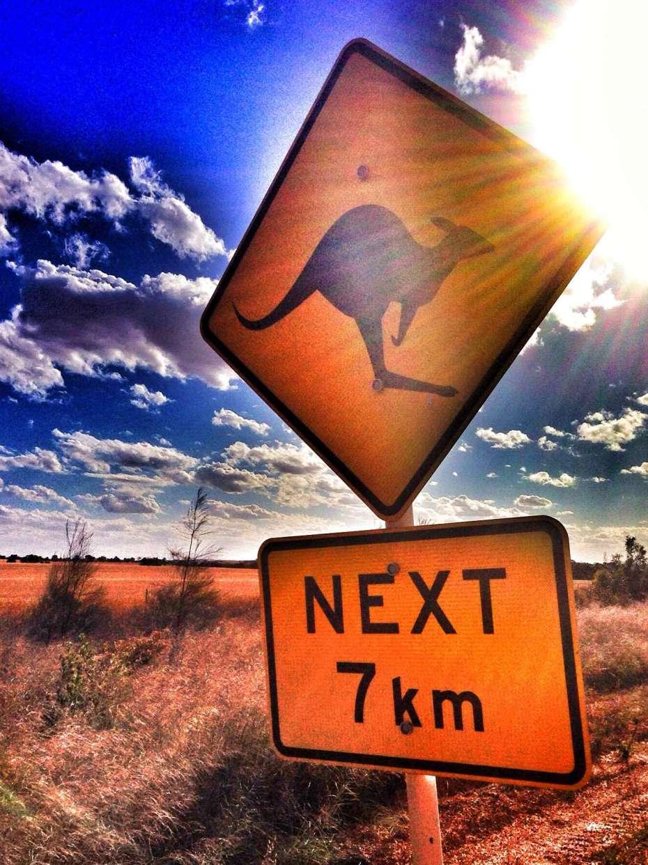 Überall in Australien warnen Schilder vor Kängurus