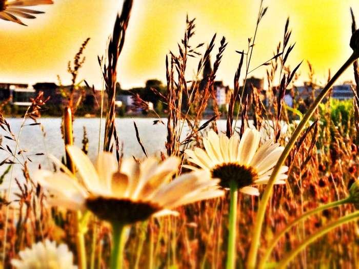 Blumen am Ufer