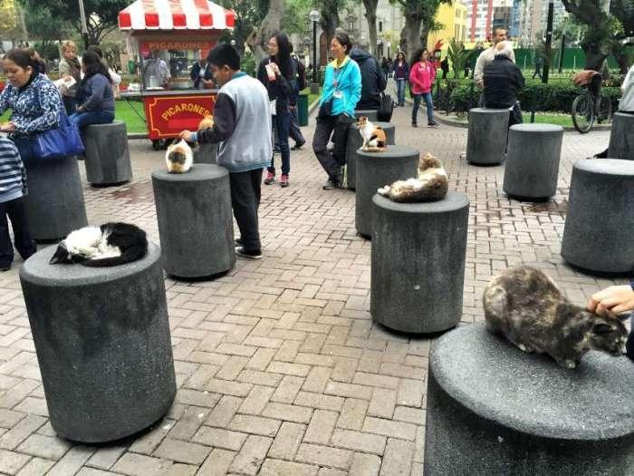 Der Katzenpark in Miraflores