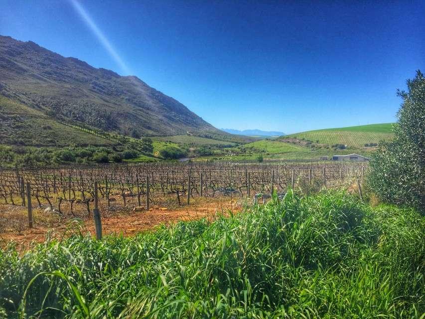 Weingut im Landesinneren bei Napier