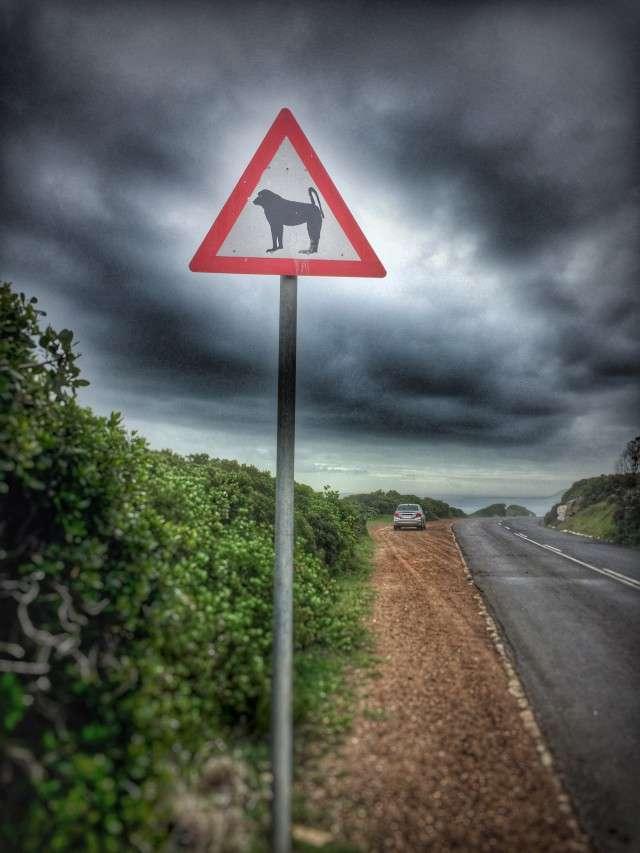 Warnschild vor Pavianen