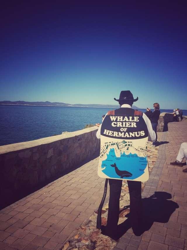 Wal-Schreier in Hermanus