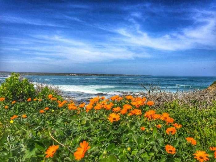 Blumen an der Küste