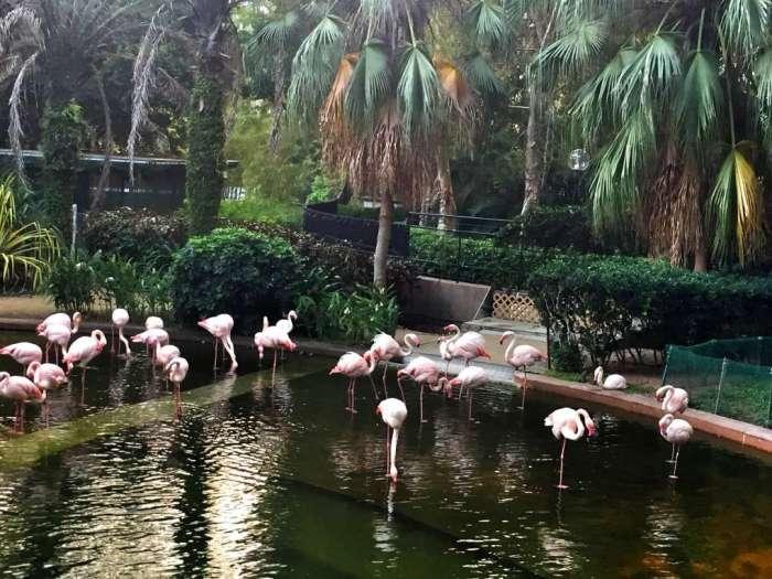 Flamingos im Kowloon Park
