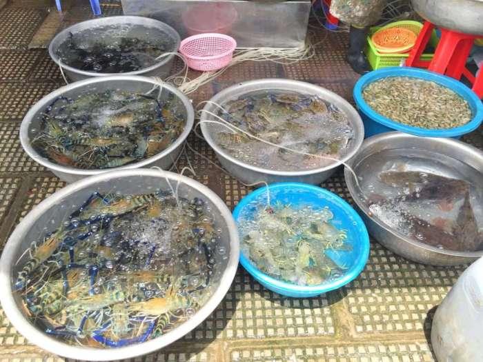 Lebende Fische auf dem Zentralmarkt