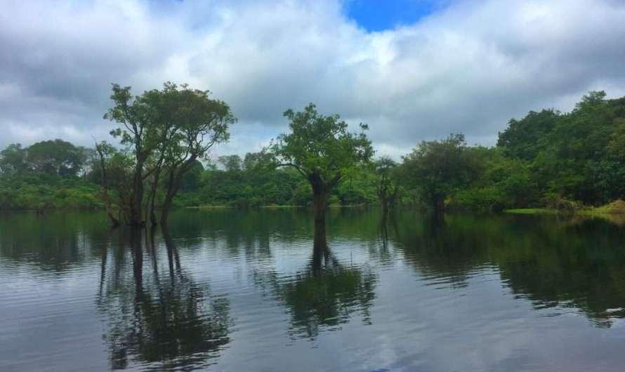 Woher stammt der Name Amazonas?