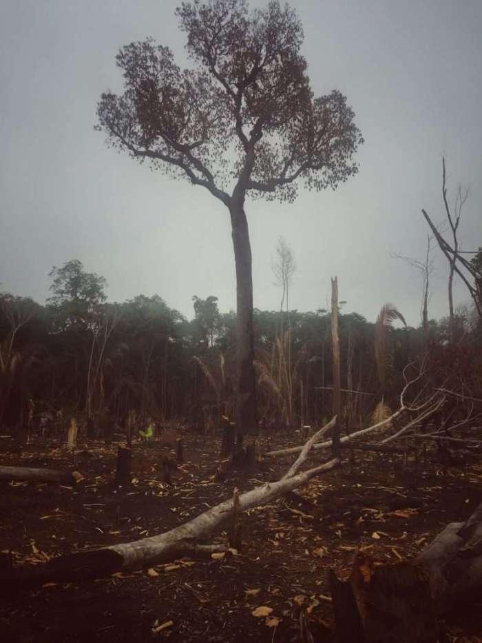 Brandrodung im Dschungel. Im Hintergrund: Auch von einer anderen Rodung