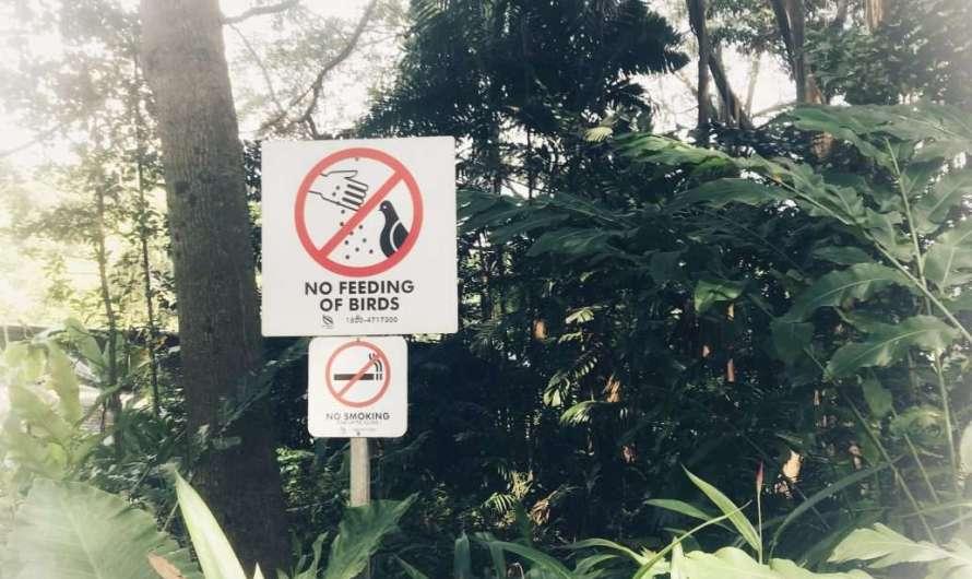 Rauchverbot in Singapur