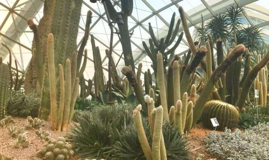 Flower Dome – das größte Gewächshaus der Welt