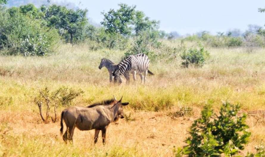 Rundreisen durch Südafrika, Namibia und Simbabwe