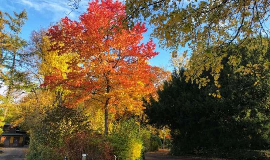 Spaziergang zu den Bäumen der Zukunft