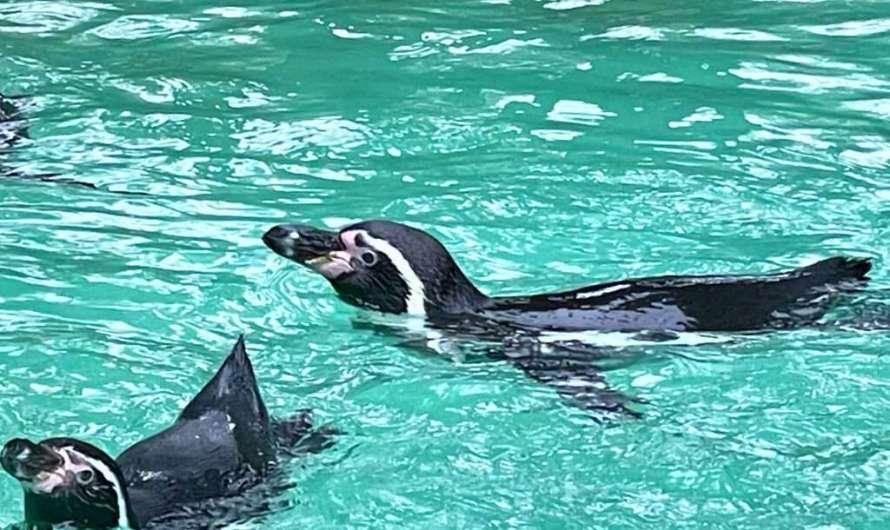 Pinguin, Robbe, Ameisenbär und Co – der Dortmunder Zoo