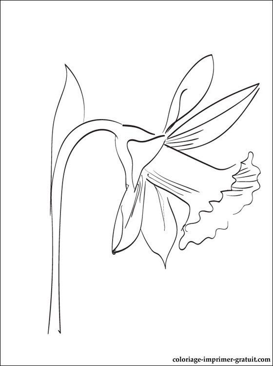 Coloriage Yakari Imprimer Free Coloring Pages Globalchin Coloring