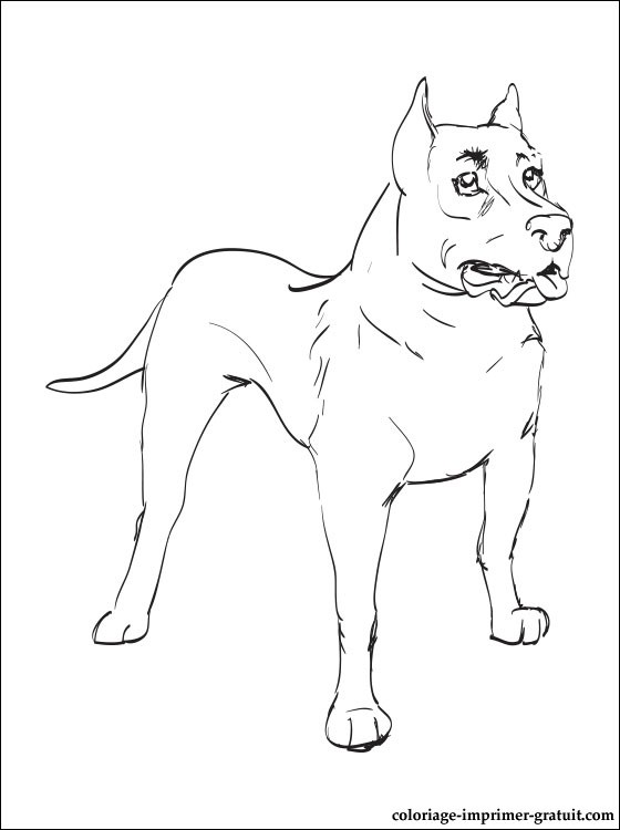 Coloriage Staffordshire Bull Terrier A Imprimer