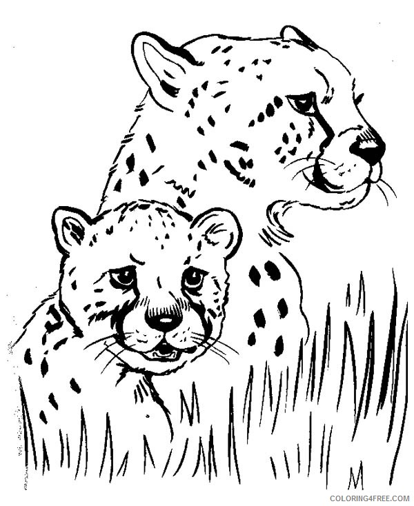 Baby Cheetah Coloring Pages With Mom Coloring4free Coloring4free Com